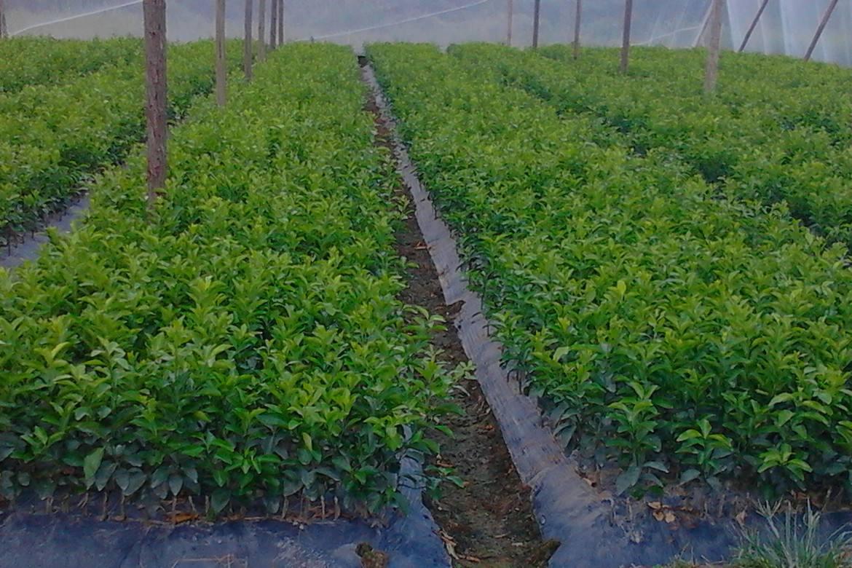 十三五末我国造林苗木有望全部实现基地供种